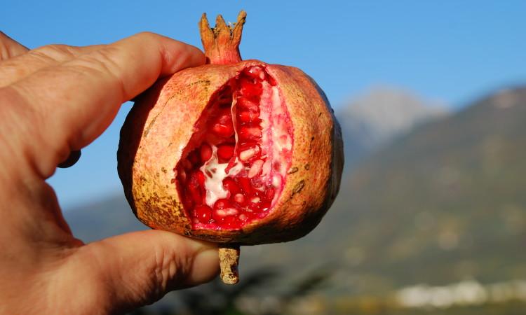Der aufgesprungene Granatapfel