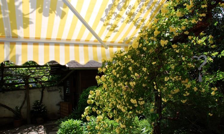 Im Sommer-Hausgarten - Bild G.J.Dekas (c) 2013