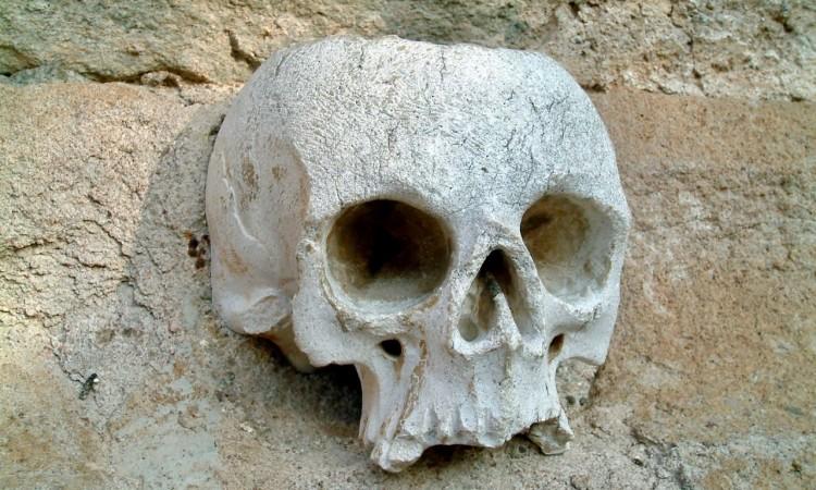 Der Kopf, die Urform der Schale - Bild G.J. Dekas (c) 2005