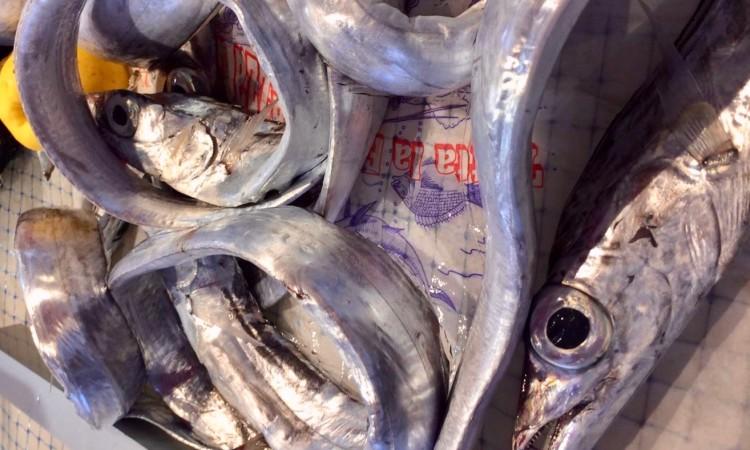 Aalglatt windet sich der Aal Bild von einem Fischmarkt auf Sizilien - privat (c) 2019